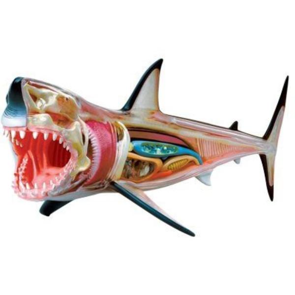 【4D MASTER】立體拼組模型-半透視大白鯊 26111